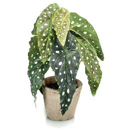 Kunstplant Begonia Maculata Groen 30cm
