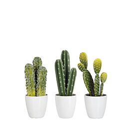 60581 J-Line Kunstplant cactus 3st 26x11x11 www.wantsandneeds.nl