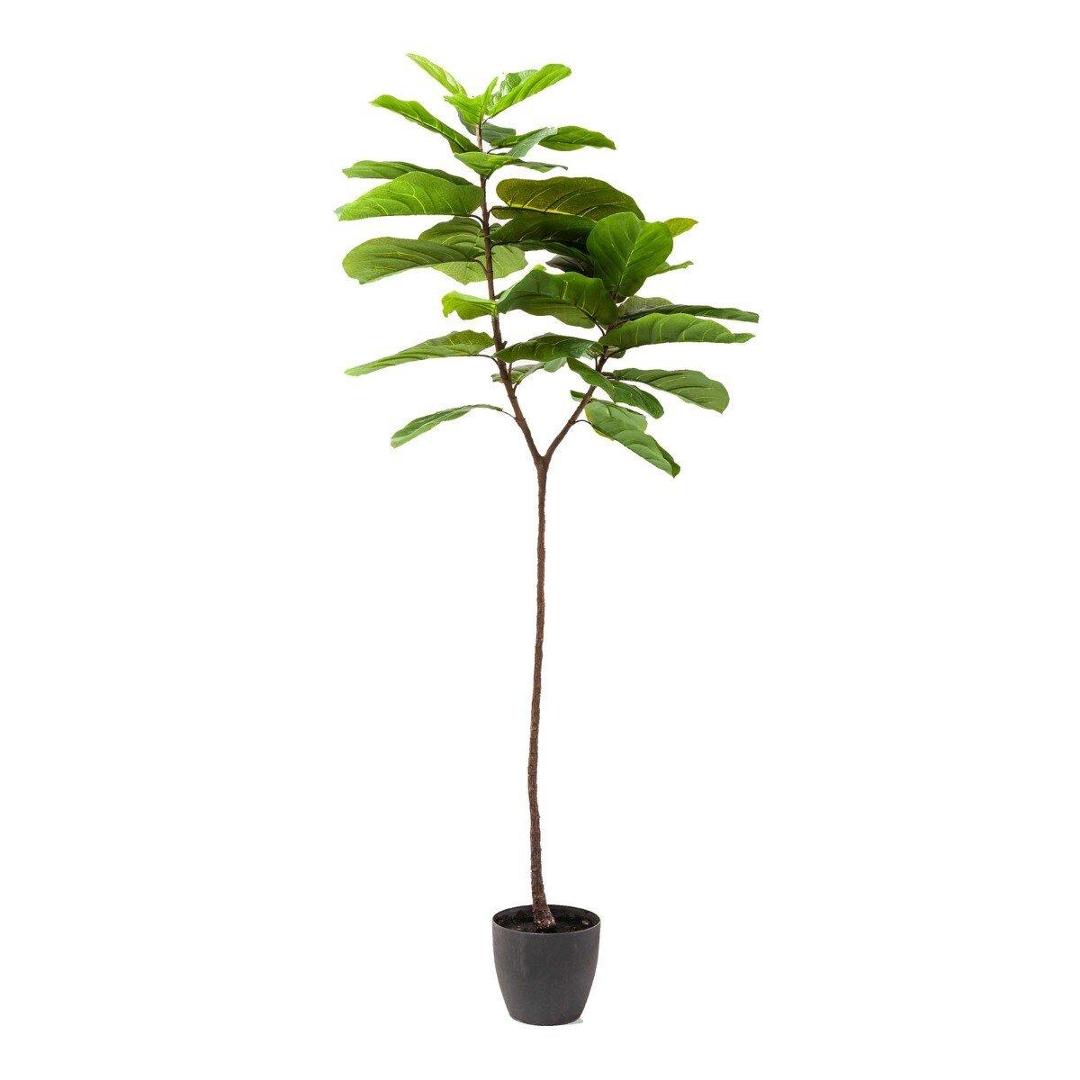 Kare Design kunstplant leaf tree 170 x 40 x 20