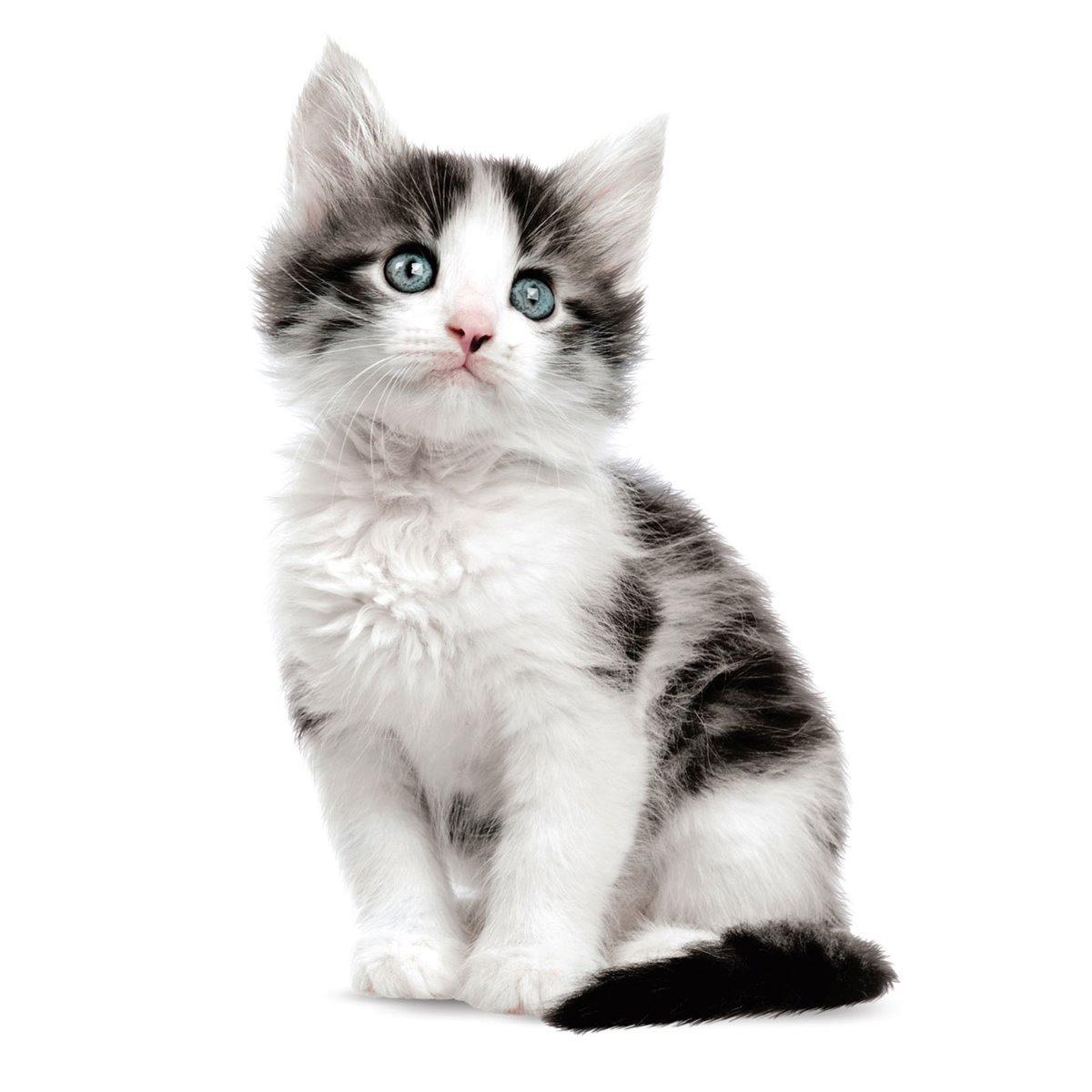 KEK Amsterdam Kittens Muursticker Jack