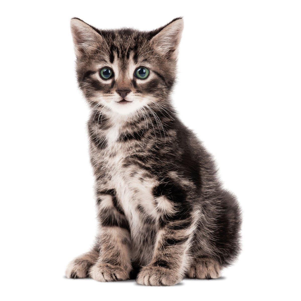KEK Amsterdam Kittens Muursticker Zoe
